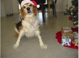 Bailey Plays Santa