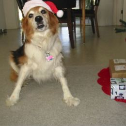 Bailey Plays Santa