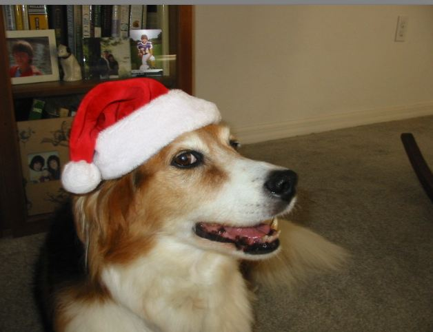 Bailey's Santa Look!