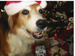 Bailey, you poser!