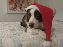Joy's First Santa Hat