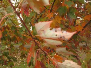 bailey's tree leaves fall 2013