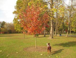 Joy looks up at baileys tree