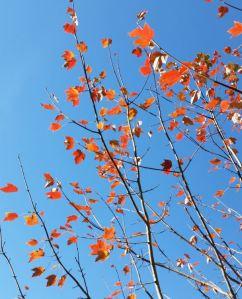 baileys tree fall 2014 naked leaves 2